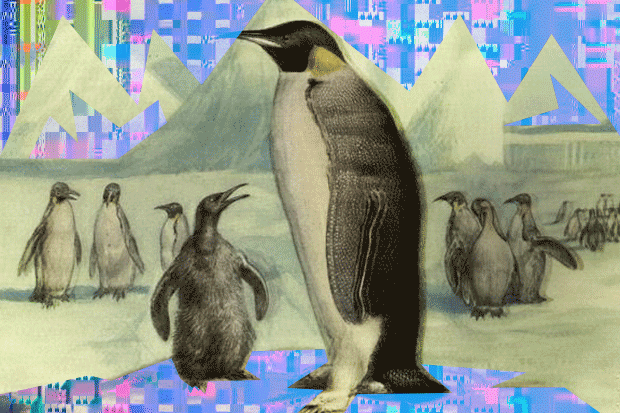 linux-distros-100638014-primary.idge-InfoWorld